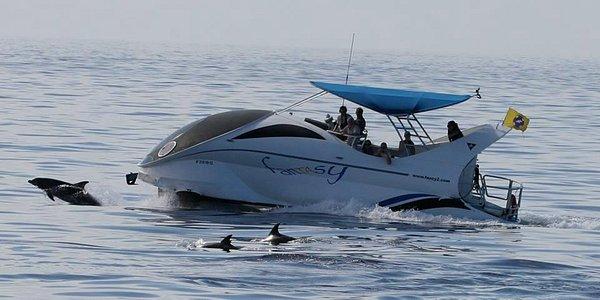delfines con fantasy