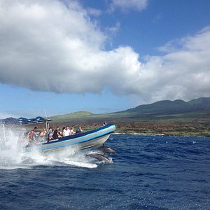 Dolphins surfing the bow of one of our rafts.