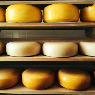Wheels of cheese in the aging room.