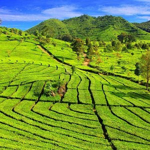 Nice view of Tea Country
