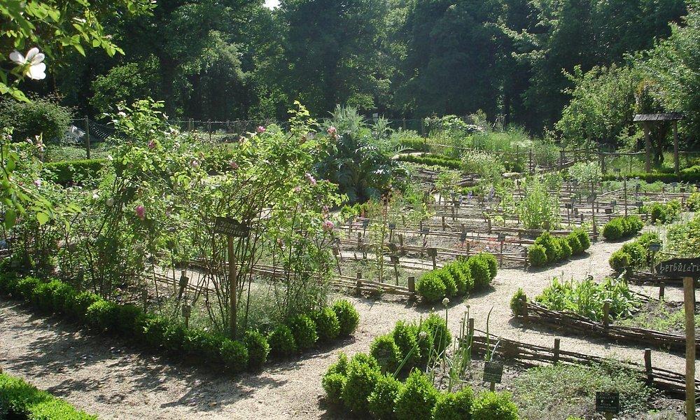 Vue du jardin médiéval