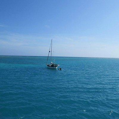 Little Africa, Dry Tortugas, FL. Vida marinha abundante!