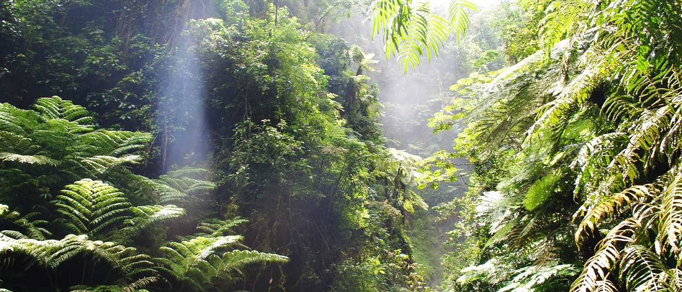 Pristine cloud forest