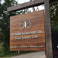 Welcome to Siam Insect Zoo