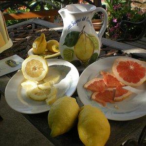 Fresh Lemonade and citrus tasting!