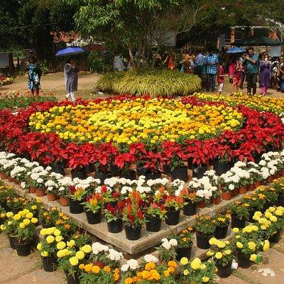 Flower Show at the Kanakakkunnu Palace