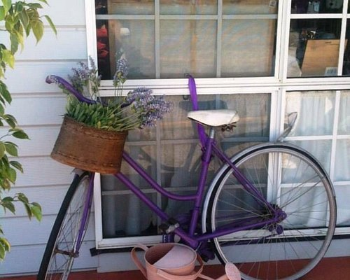Amandine Lavender shop