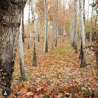 Najvan park in fall