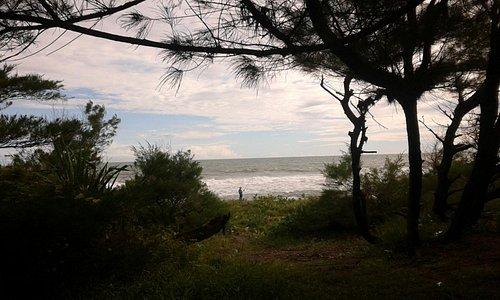 kawasan cemara udang yang berbatasan langsung dengan pantai, dengan hamparan rumput hijau