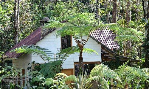 cabaña de orquigonia
