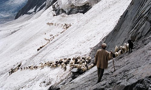 Sheep-Folk-at-Chobia-Pass Bharmour-area