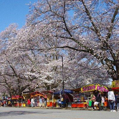 桜の季節は屋台が出てお祭りムードが高まります