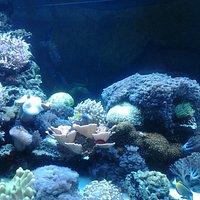 Кораллы, на снимке цвет не видно )