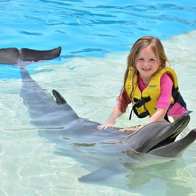 Beautiful experience! Dolphin interaction Cancun.