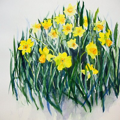 Daffodils watercolor