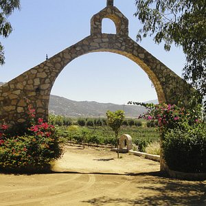 Welcome to the Valle de Guadalupe!