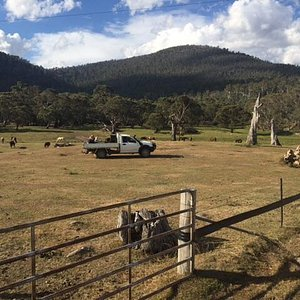 Feeding the horses on the back of the ute after a gorgeous horse ride even seeing kangaroos!