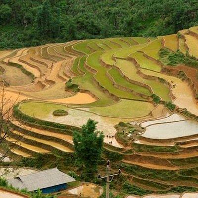 Les rizières en terrasse au Nord du Vietnam