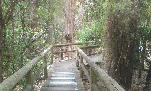 Ballarat Bird World, April 2015 -  Wheelchair Accessible.