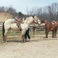 Marbury riding stable