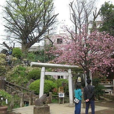 鳩森神社の富士塚