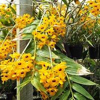 Orchid Estate #4