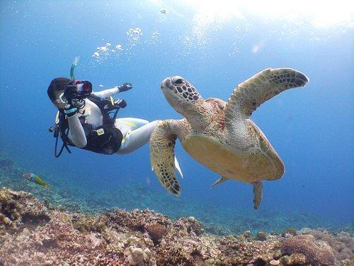 ウミガメの遭遇!!よく見れますよ