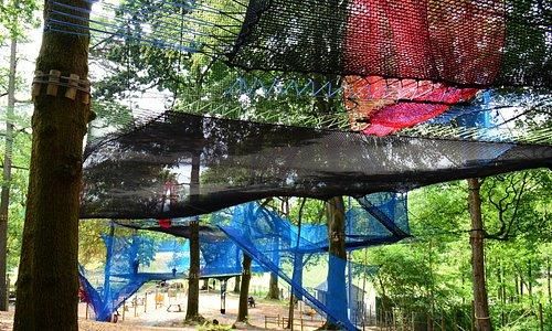 Treetop Nets