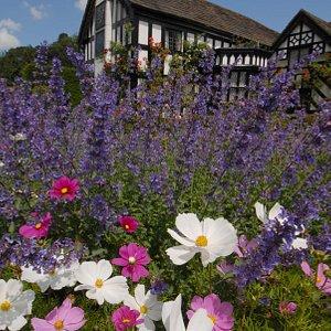 Gawsworth gardens
