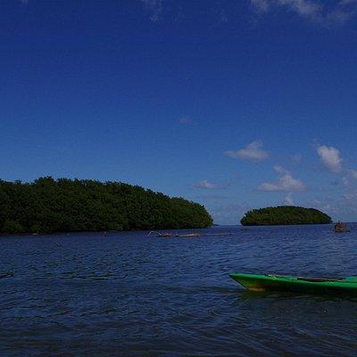Mangrove vu de la mer
