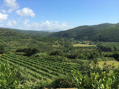 Le viti della fattoria ed il fiume Garigliano
