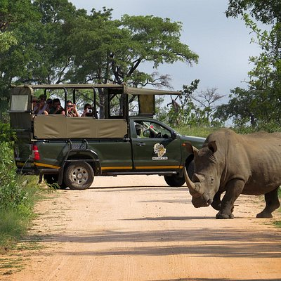 kurt safari co- Open vehicle kruger park safaris