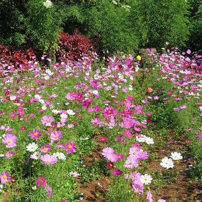 Flower - inside garden