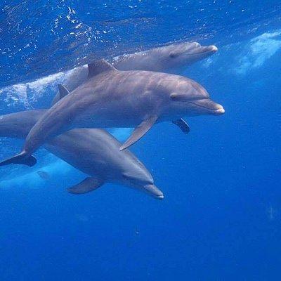 Gruppe von Delfinen