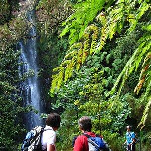 Enchanting Santana - Caldeirão Verde levada walk in Madeira