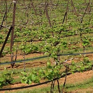 Drive for You Winery Tours