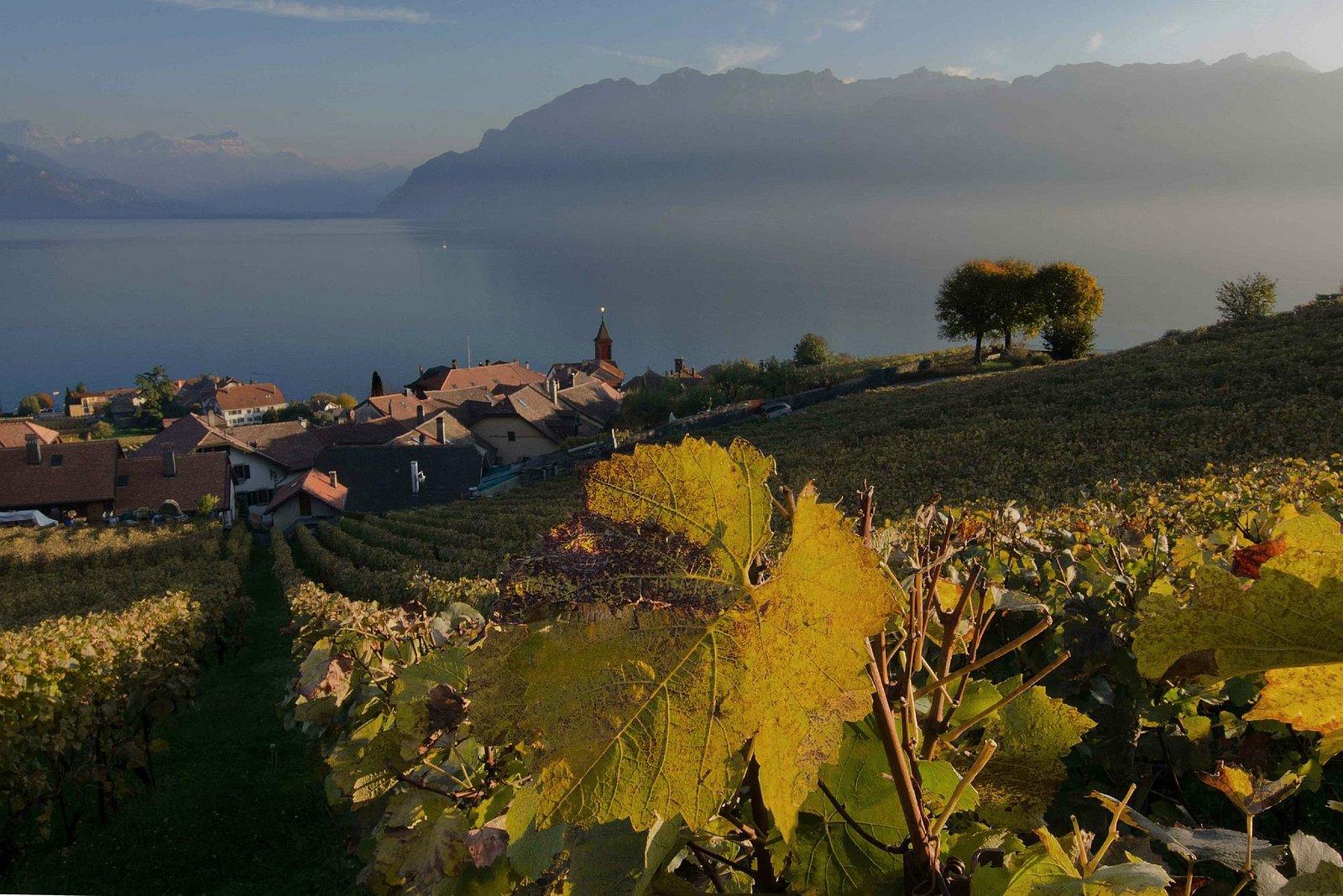 Vue du vignoble du Lavaux.