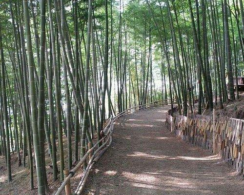 맹종죽테마공원