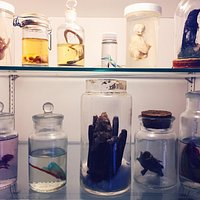 A cabinet with cool specimens inside the library.