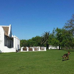 Meerlust Wine farm,  Stellenbosch