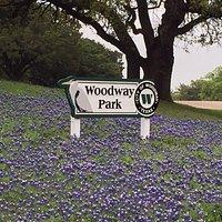 Blue bonnets in bloom April 2015