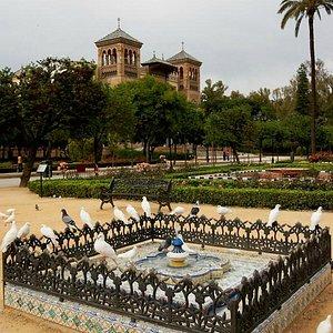 Plaza América y sus palomas