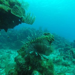 Lion Fish On our Evening Dive!