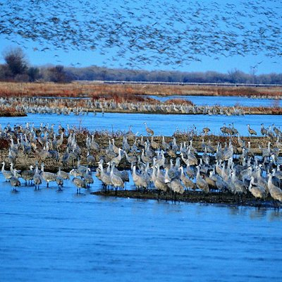 Cranes on the Platte River before sunrise at the Sanctuary