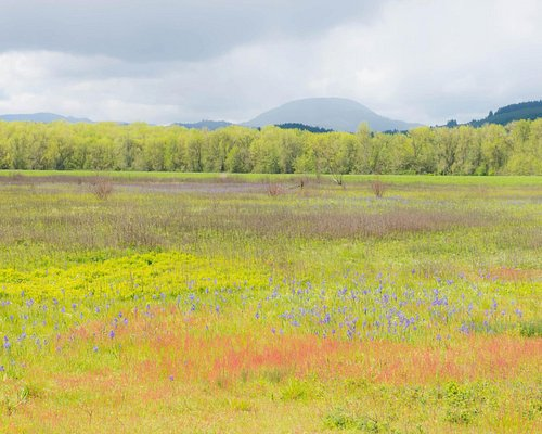 A pull back shot of the meadow