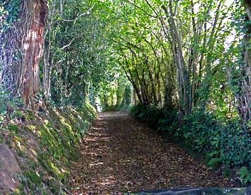 Hedgerows played a part.  To see one helps ones understanding of the difficulty.