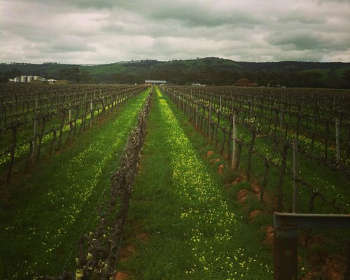 Doing the off season vineyard work and stopped to take a photo