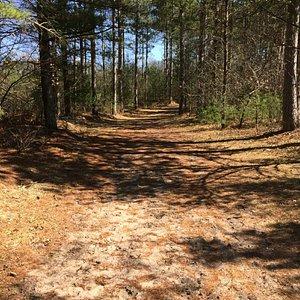 A woodland ski trail