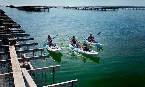 Kayak Bahía de los Alfaques