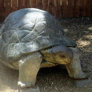Micke Grove Zoo, Lodi, Ca